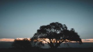 Sombra de Caldén